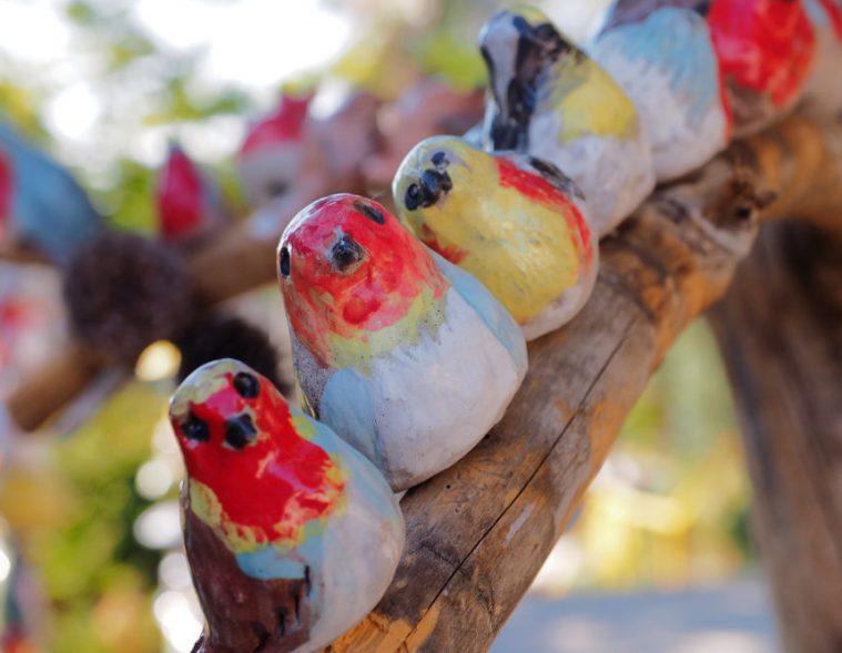 ציפורי גיל | צילום: טל גליק